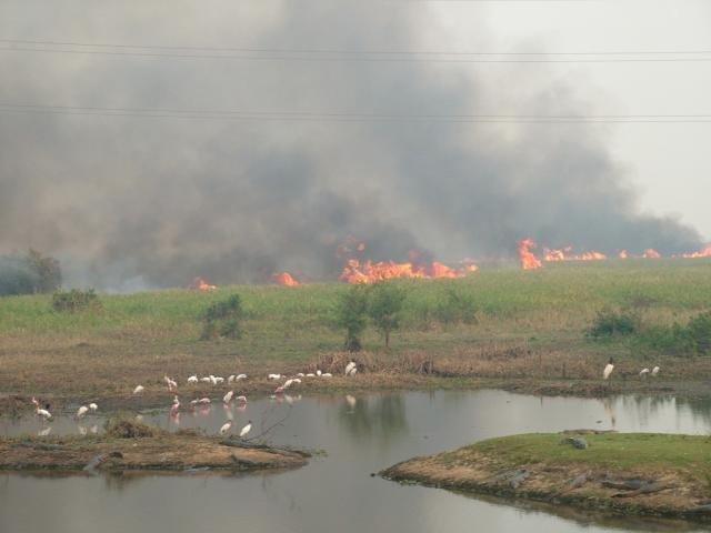 (Foto: Sandra Santos/Embrapa Pantanal)